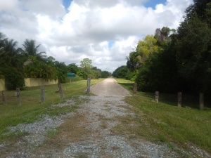 A view of the Ludlam Trail looking north from its southern terminus SW 80 ST in Miami, FL. Photo by Tomás Monzón